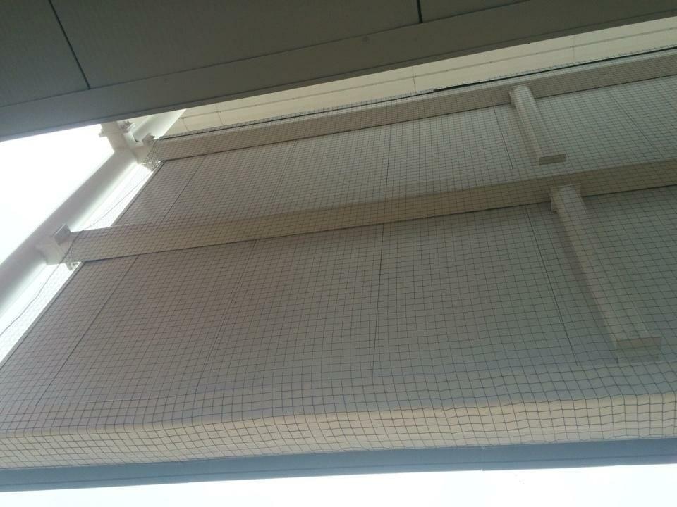 Pigeon Netting Installation