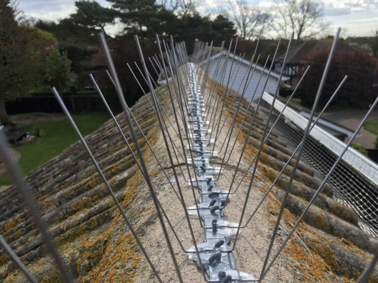 Seagull Bird Spikes - Kent bird Control Services