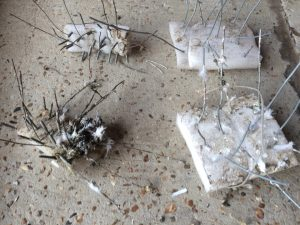 Homemade pigeon control spikes with nails in wood