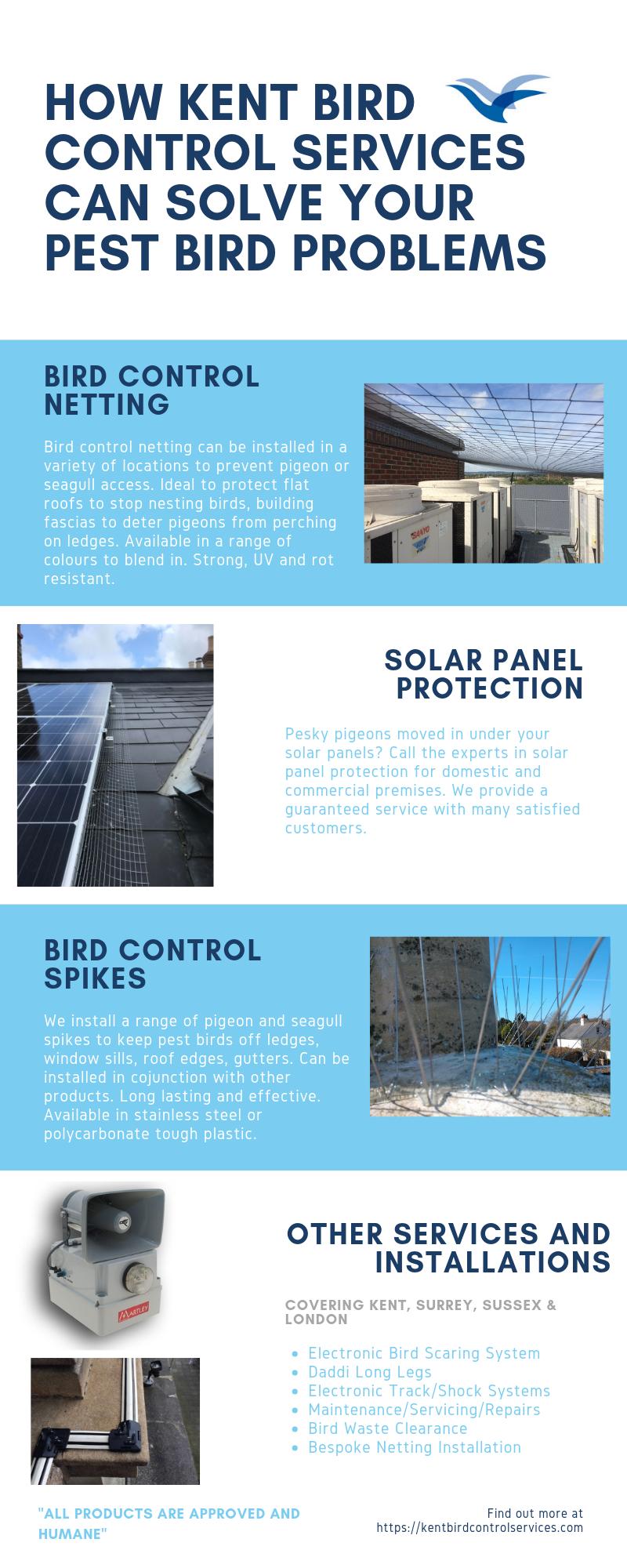 Bird Control Company Kent Infographic